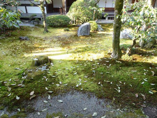 京都 醍醐寺の三宝院の裏庭