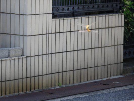 桐タンスの社長ブログ いつのまにか暑さ和らぎ秋ですね。