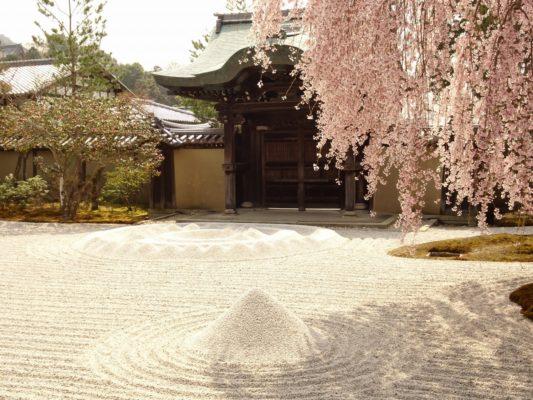 高台寺 しだれ桜 勅使門と方丈前庭