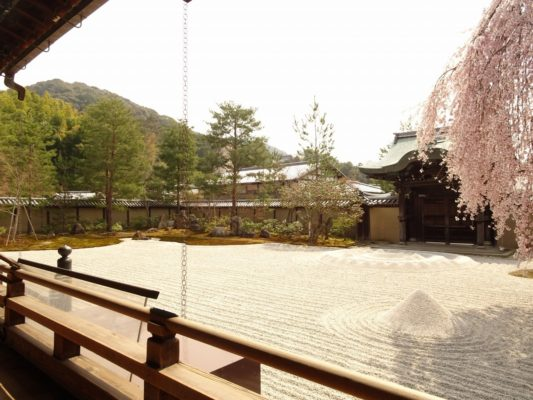 高台寺 しだれ桜 勅使門と方丈前庭 2