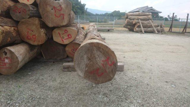こだわりの桐たんすの社長ブログ 勤労感謝の日 今年も一番いい桐の原木を買付ることが出来ました、ありがとうございます。