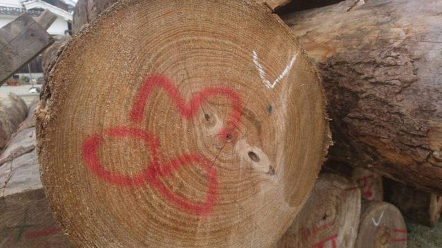 最高級柾目の桐の原木