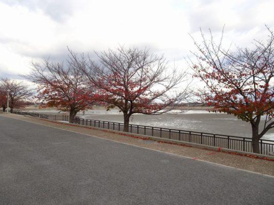 桐箪笥の社長ブログ 今の久米田池の景色!大阪は桐箪笥作りに最適な場所です。