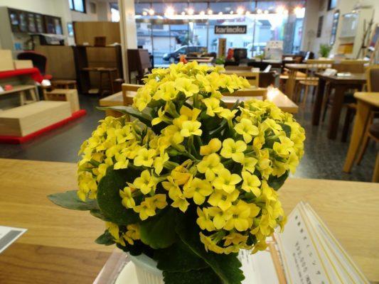 桐たんすの社長ブログ 12月 お店のお花のご紹介と今年最後のクリアランスセールのPRです。です。