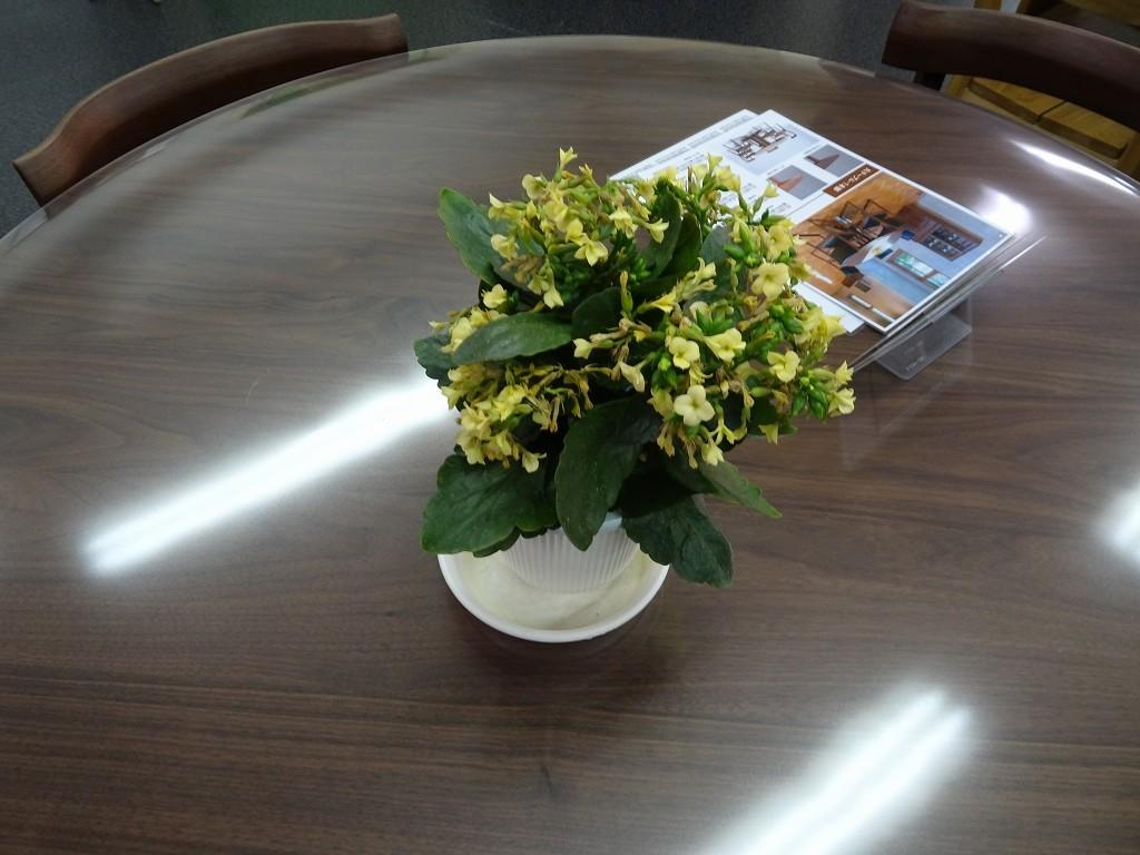 こだわり桐箪笥の社長ブログ カランコエもまた咲いてきました。桐箪笥も手間暇かけて愛情を与えたらいい桐たんすができます。