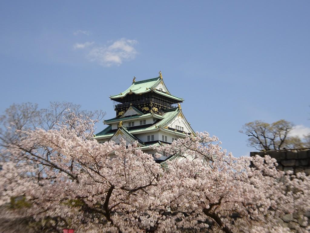 2019年 大阪城 桜 西ノ丸庭園 こだわりの桐たんすの社長ブログ