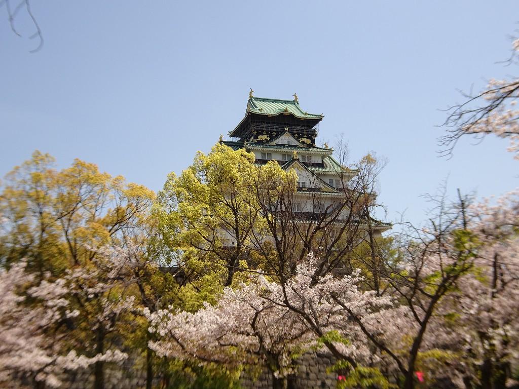 2019年 大阪城 桜 こだわりの桐たんすの社長ブログ