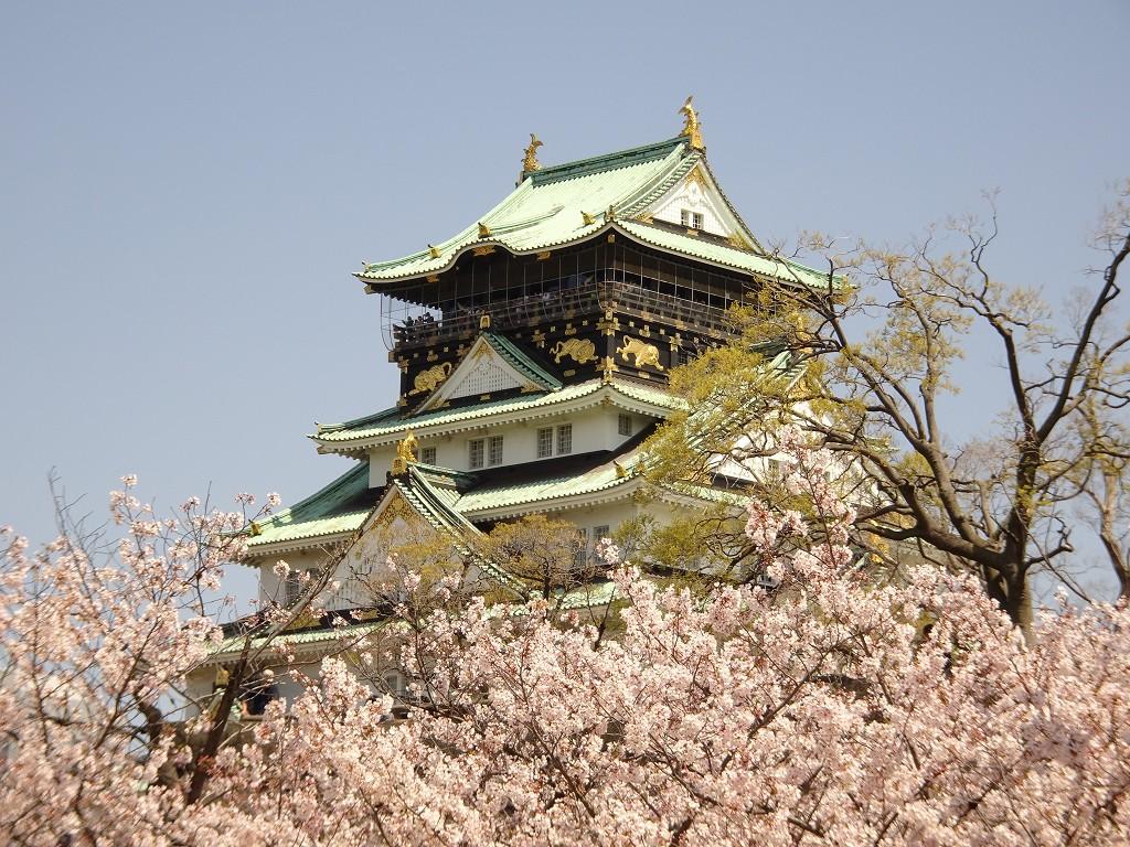 こだわりの桐箪笥の社長ブログ 今年の桜は大阪城の桜をご紹介します。