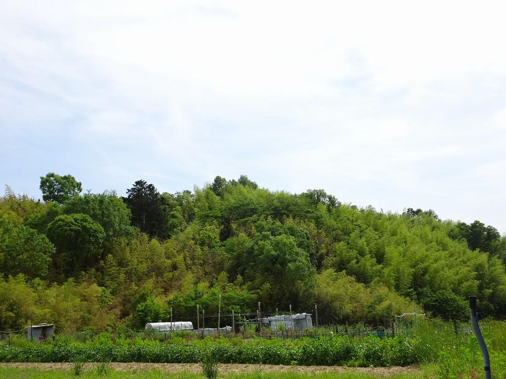 こだわりの桐箪笥屋の社長ブログ 新緑が一番うつくしい季節ですね。