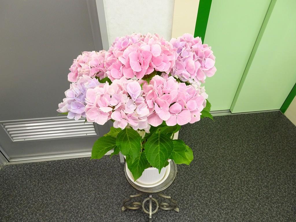 桐たんすの社長ブログ 6月新年度を迎えて、気分を新しくお花を購入しました。